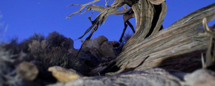 cropped-td_landscape_04.jpg